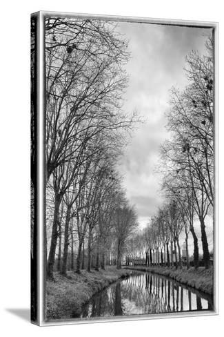 France, Burgundy, Nievre. Trees with Bird Nests on the Nivernais Canal-Kevin Oke-Stretched Canvas Print