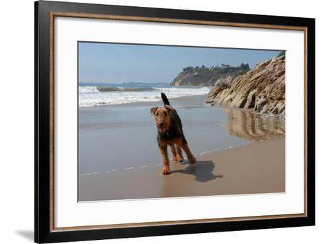 Airedale Playing on the Beach-Zandria Muench Beraldo-Framed Art Print