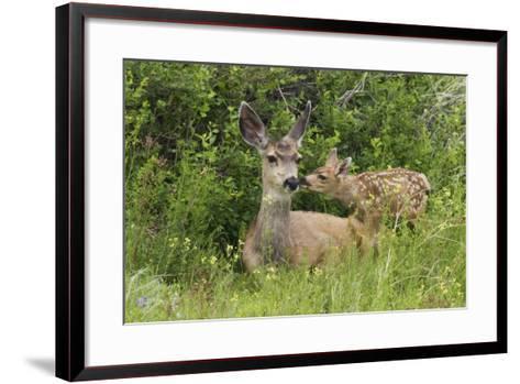 Mule Deer Doe with Fawn-Ken Archer-Framed Art Print