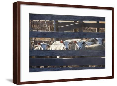 Australia, Victoria, Yarra Valley, Sheep Farm-Walter Bibikow-Framed Art Print