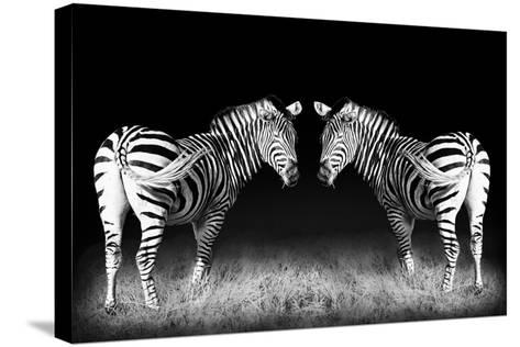 Black and White Mirrored Zebras-Sheila Haddad-Stretched Canvas Print