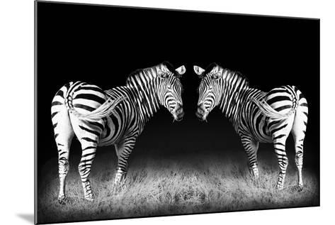 Black and White Mirrored Zebras-Sheila Haddad-Mounted Photographic Print