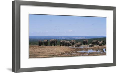 South Africa, African Elephant in Addo Elephant National Park-Paul Souders-Framed Art Print