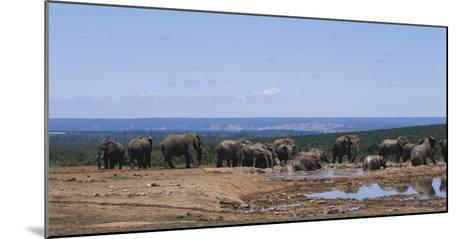 South Africa, African Elephant in Addo Elephant National Park-Paul Souders-Mounted Photographic Print
