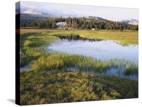 California, Sierra Nevada, Yosemite National Park, the Tuolumne River Lake-Christopher Talbot Frank-Stretched Canvas Print