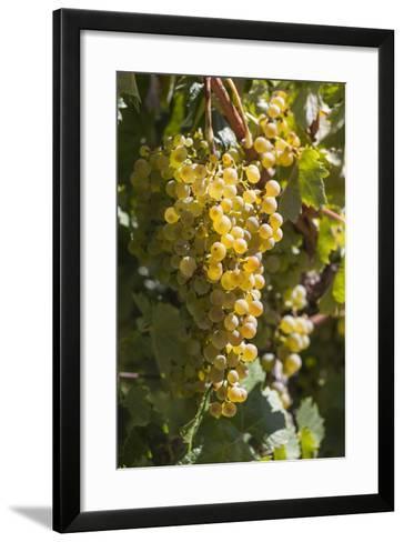Australia, Clare Valley, Sevenhill, Winery Vineyard-Walter Bibikow-Framed Art Print