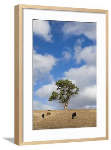 Australia, Fleurieu Peninsula, Normanville, Field with Cows-Walter Bibikow-Framed Art Print