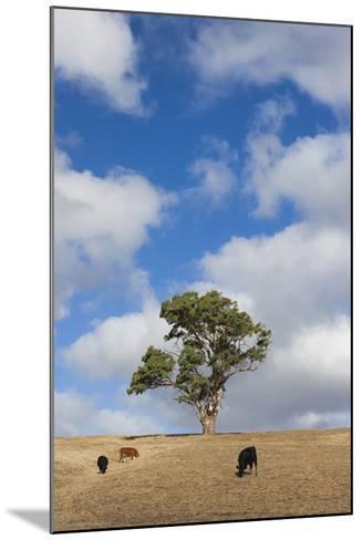 Australia, Fleurieu Peninsula, Normanville, Field with Cows-Walter Bibikow-Mounted Photographic Print