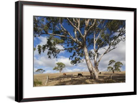Australia, Fleurieu Peninsula, Normanville, Field with Cows-Walter Bibikow-Framed Art Print