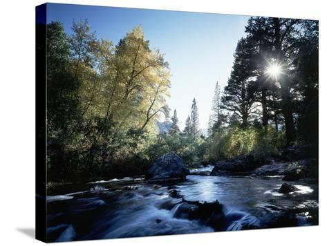 California, Sierra Nevada, Fall Color Trees on a Creek-Christopher Talbot Frank-Stretched Canvas Print