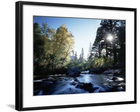 California, Sierra Nevada, Fall Color Trees on a Creek-Christopher Talbot Frank-Framed Art Print