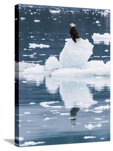 Alaska, Glacier Bay National Park. Bald Eagle on Iceberg-Jaynes Gallery-Stretched Canvas Print