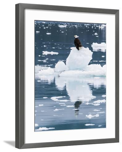 Alaska, Glacier Bay National Park. Bald Eagle on Iceberg-Jaynes Gallery-Framed Art Print