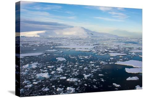 Antarctica. Near Adelaide Island. the Gullet. Ice Floes and Brash Ice-Inger Hogstrom-Stretched Canvas Print