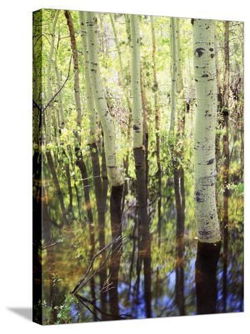 California, Sierra Nevada, Inyo Nf, Aspen Trees Along Rush Creek-Christopher Talbot Frank-Stretched Canvas Print
