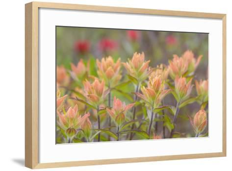 Alaska, Glacier Bay National Park. Indian Paintbrush Flowers-Jaynes Gallery-Framed Art Print