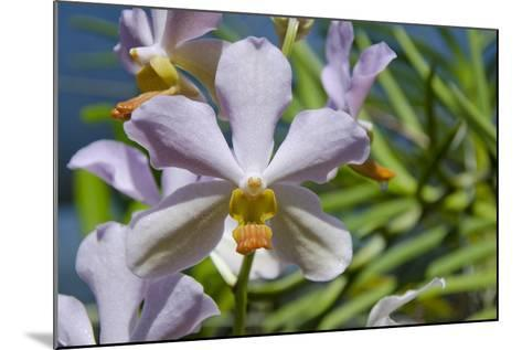 Australia, Northern Territory, Darwin. Jennys Orchid Garden-Cindy Miller Hopkins-Mounted Photographic Print