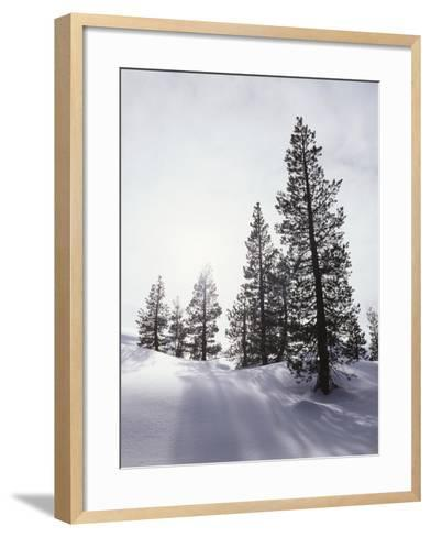 California, Rancho Cuyamaca Sp, Mutated Albino White Lupine-Christopher Talbot Frank-Framed Art Print