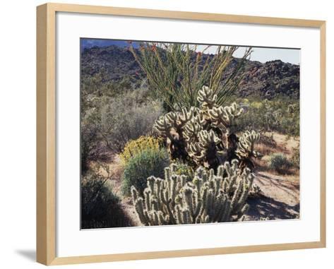 California, Anza Borrego Desert Sp, Desert Vegetation-Christopher Talbot Frank-Framed Art Print
