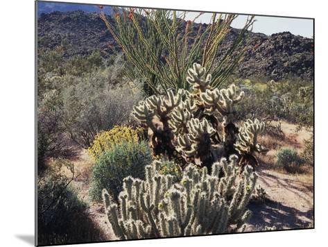 California, Anza Borrego Desert Sp, Desert Vegetation-Christopher Talbot Frank-Mounted Photographic Print
