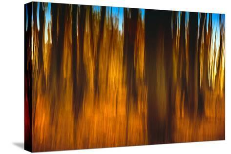 An Impressionistic in Camera Blur of Colorful Autumn Trees-Rona Schwarz-Stretched Canvas Print