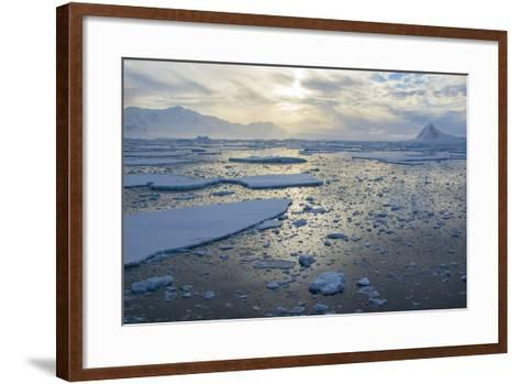 Antarctica, Near Adelaide Island. the Gullet. Ice Floes at Sunset-Inger Hogstrom-Framed Art Print