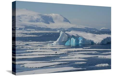 Antarctica. Antarctic Circle. the Gullet. Iceberg and Ice Floes-Inger Hogstrom-Stretched Canvas Print