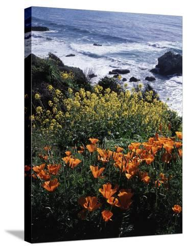 California, Big Sur Coast, Central Coast, California Poppy and Ocean-Christopher Talbot Frank-Stretched Canvas Print