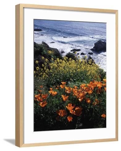 California, Big Sur Coast, Central Coast, California Poppy and Ocean-Christopher Talbot Frank-Framed Art Print