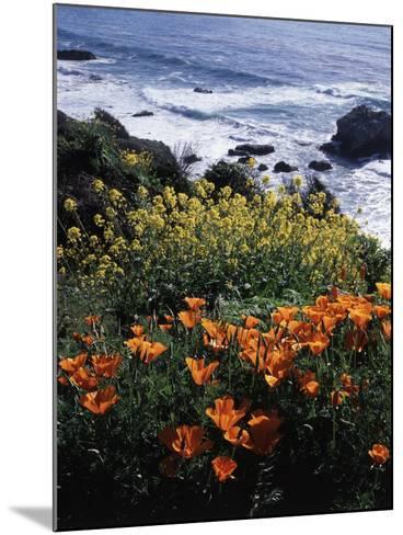 California, Big Sur Coast, Central Coast, California Poppy and Ocean-Christopher Talbot Frank-Mounted Photographic Print