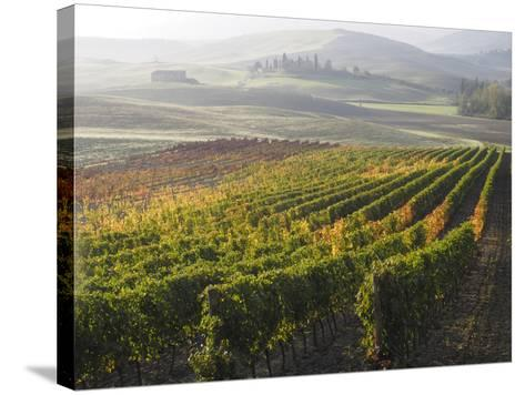 Europe, Italy, Tuscany. Autumn Vineyards in Bright Colors-Julie Eggers-Stretched Canvas Print