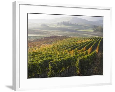 Europe, Italy, Tuscany. Autumn Vineyards in Bright Colors-Julie Eggers-Framed Art Print
