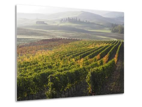 Europe, Italy, Tuscany. Autumn Vineyards in Bright Colors-Julie Eggers-Metal Print