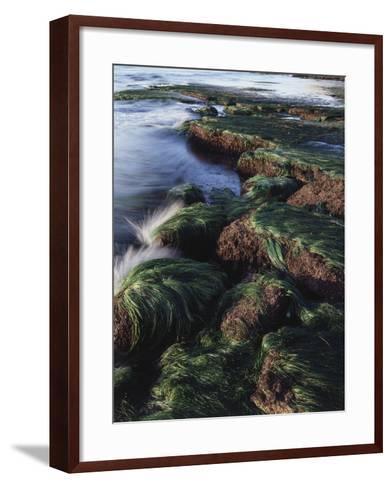 California, San Diego, Waves Crash on Eel Grass Covered Rocks-Christopher Talbot Frank-Framed Art Print