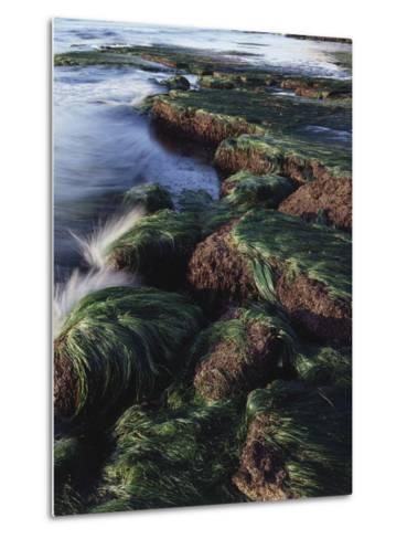 California, San Diego, Waves Crash on Eel Grass Covered Rocks-Christopher Talbot Frank-Metal Print