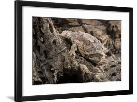 Arizona, Madera Canyon. Close Up of Regal Horned Lizard-Jaynes Gallery-Framed Art Print