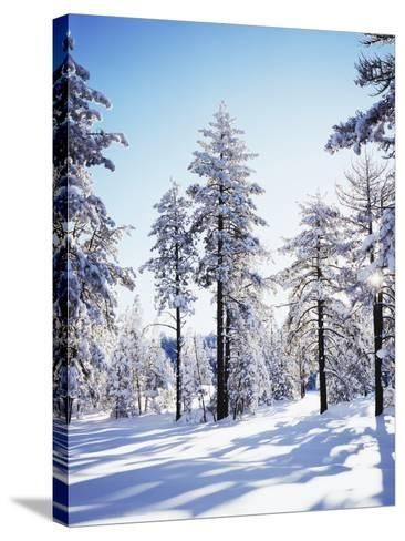 California, Cleveland Nf, Laguna Mts, Sunrise on a Winter Morning-Christopher Talbot Frank-Stretched Canvas Print