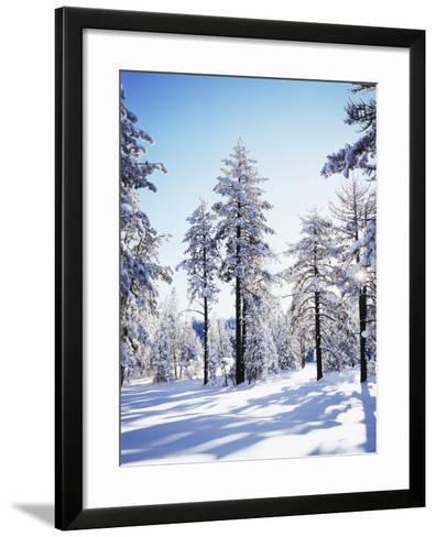 California, Cleveland Nf, Laguna Mts, Sunrise on a Winter Morning-Christopher Talbot Frank-Framed Art Print