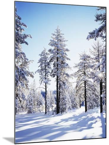 California, Cleveland Nf, Laguna Mts, Sunrise on a Winter Morning-Christopher Talbot Frank-Mounted Photographic Print