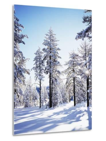 California, Cleveland Nf, Laguna Mts, Sunrise on a Winter Morning-Christopher Talbot Frank-Metal Print