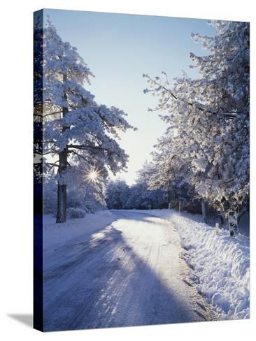 California, Cleveland Nf, Laguna Mts, Winter Morning Along a Highway-Christopher Talbot Frank-Stretched Canvas Print