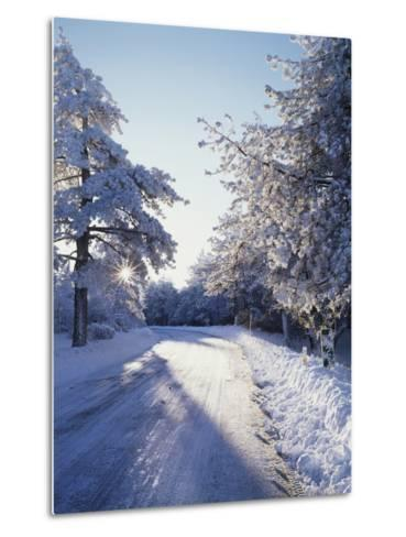 California, Cleveland Nf, Laguna Mts, Winter Morning Along a Highway-Christopher Talbot Frank-Metal Print