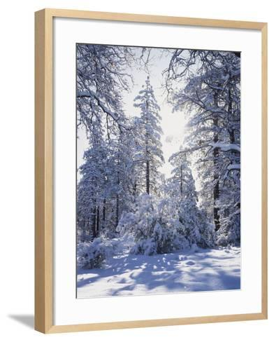 California, Cleveland Nf, Laguna Mts, Winter Sunrise in Forest-Christopher Talbot Frank-Framed Art Print
