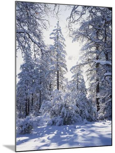 California, Cleveland Nf, Laguna Mts, Winter Sunrise in Forest-Christopher Talbot Frank-Mounted Photographic Print