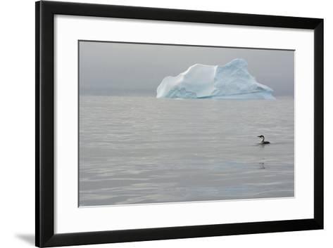 Antarctica. Charlotte Bay. Antarctic Shag and an Iceberg-Inger Hogstrom-Framed Art Print