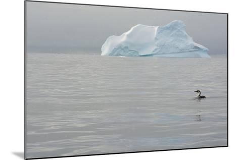 Antarctica. Charlotte Bay. Antarctic Shag and an Iceberg-Inger Hogstrom-Mounted Photographic Print
