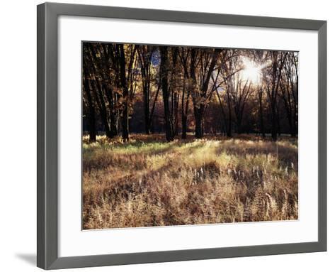 California, Sierra Nevada, Yosemite National Park, the Sunset over Fall Forest-Christopher Talbot Frank-Framed Art Print