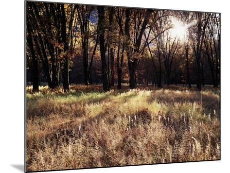 California, Sierra Nevada, Yosemite National Park, the Sunset over Fall Forest-Christopher Talbot Frank-Mounted Photographic Print