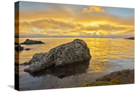 Sunset, Bird Island, Point Lobos State Reserve, California, USA-Michel Hersen-Stretched Canvas Print