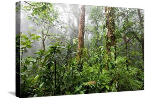 Monteverde Cloud Forest Reserve, Costa Rica-Susan Degginger-Stretched Canvas Print